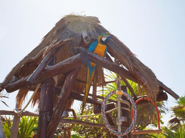 cozumel island mexico coconuts restaurant